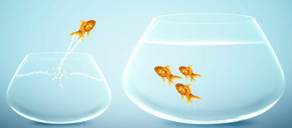 goldfish jumping into bigger fishbowl.