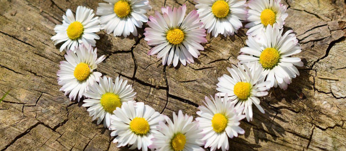 פרחי אהבה